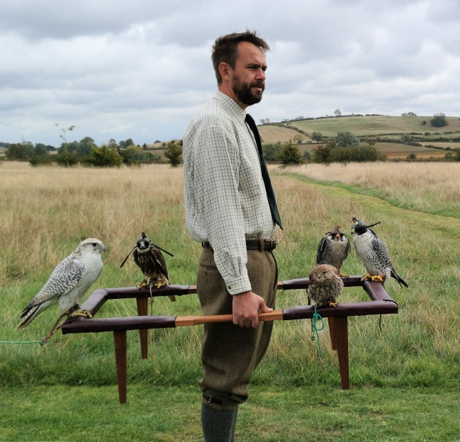 Falconry. Traditional cadge with peregrine falcon, gyrfalcon, lanner falcon,and kestrel