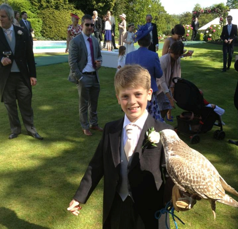 wedding falconry Boy with gyrfalcon